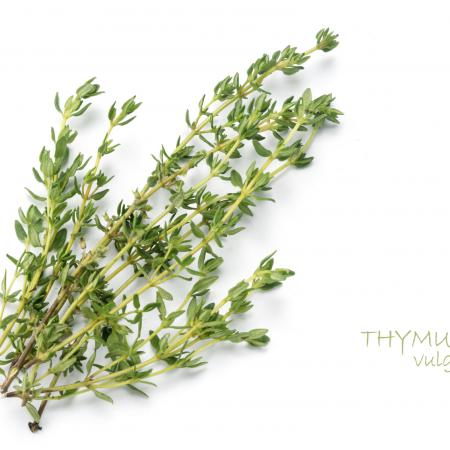 Thymus vulgaris...