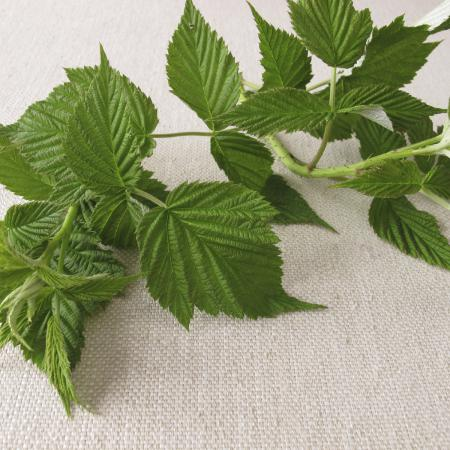 Rubus idaeus L....