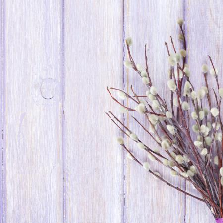 Salix purpurea L....